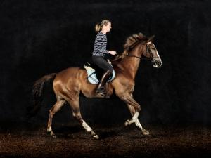 Hest-005